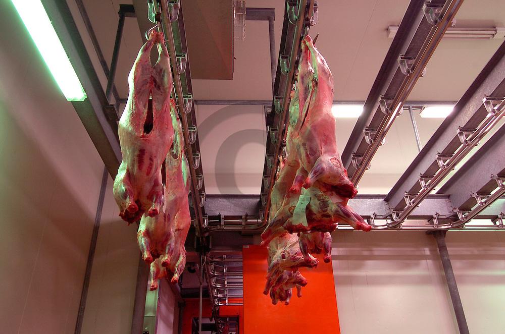 16/03/05 - VENAREY LES LAUMES - COTE D OR - FRANCE - Abattoir et carcasses d agneaux - Photo Jerome CHABANNE