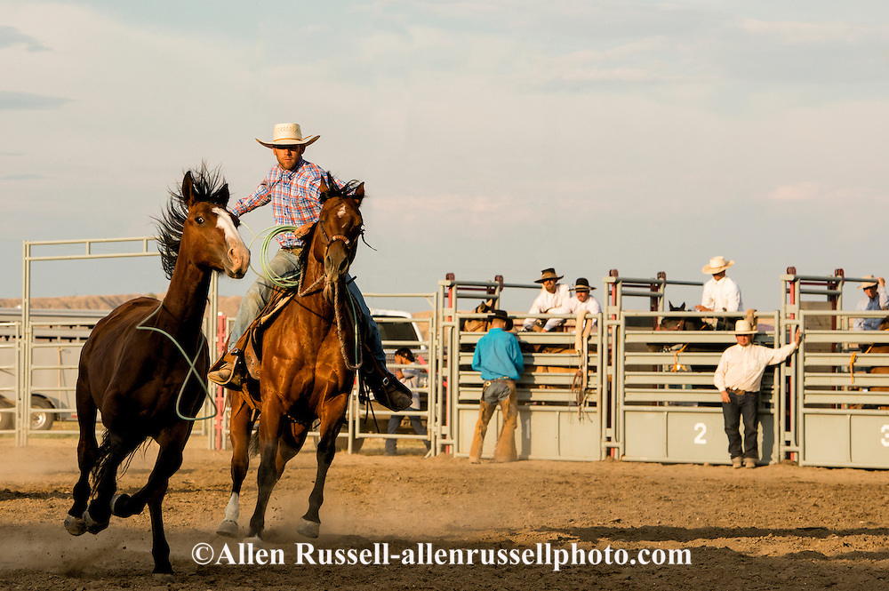 Will James Roundup, Ranch Rodeo, Wild Horse Roping, Hardin, Montana.