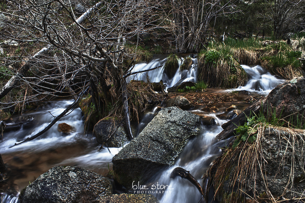 A springtime cascade of water brings a metamorphosis to a high desert mountain forest.<br />