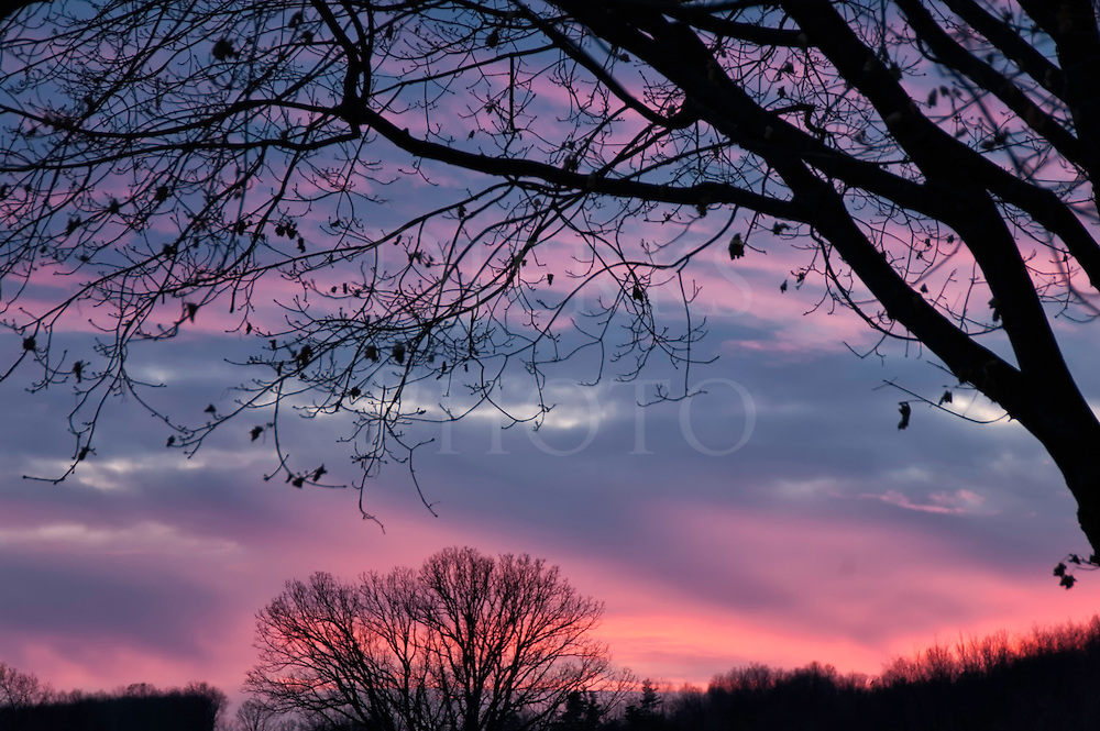 Sunset sky in dramatic pink and blue, with silhouetted tree limbs in black.