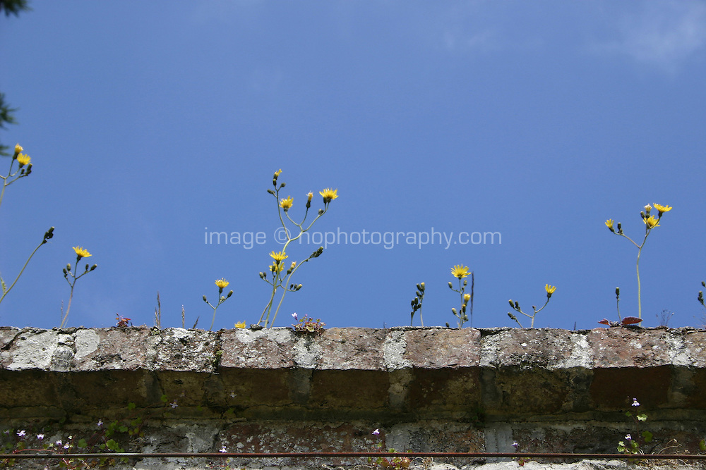 Weeds growing from the top of an old stone wall