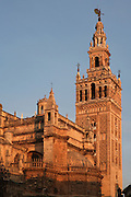 Low angle view of Giralda Minaret, Seville Cathedral, Andalucia, Spain, pictured on December 26, 2006 in the winter morning light. Seville Cathedral is the largest Gothic building in the world. It was converted from the original 12th century Almohad Mosque on this site during the 16th century and the original Moorish entrance court and Giralda Minaret are both integrated in the cathedral. Inside is the tomb of the explorer Christopher Columbus (1451-1506). The Giralda is constructed of cut bricks, originally 82 metres high, now 103 metres high with the 16th century belfry added to the original tower. Picture by Manuel Cohen