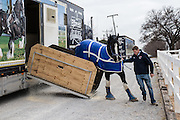 Unloading one of the Clydesdale horses from the trailer at Express Clydesdales