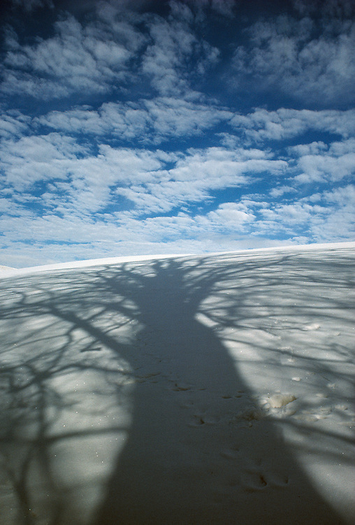 Beech shadow on snowy field