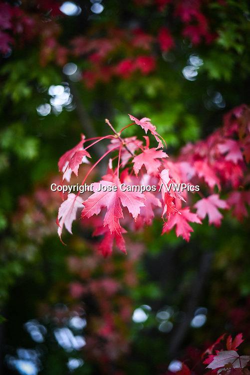 Autumn leaves in Grant Park Chicago, Illinois