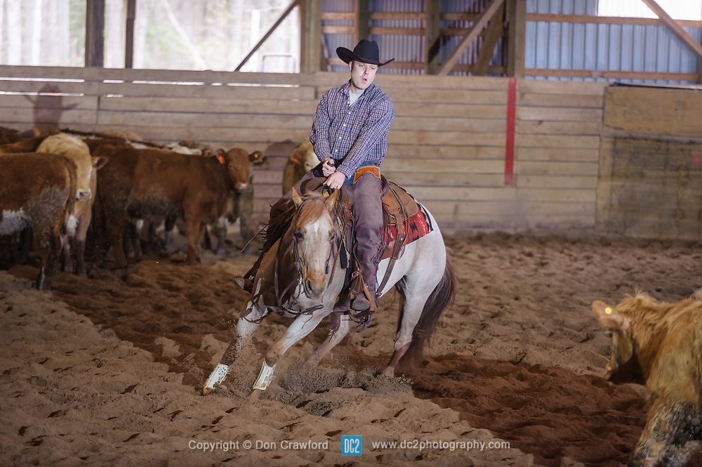 April 29 2017 - Minshall Farm Cutting 1, held at Minshall Farms, Hillsburgh Ontario. The event was put on by the Ontario Cutting Horse Association. Riding in the 25,000 Novice Horse Non-Pro Class is Tyler Hamilt Scott on Sweet and Lo owned by the rider.