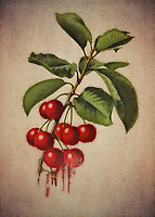 When you look at this fine art piece depicting a small assortment of cherries, what are some thoughts that spring to mind? You can interpret this piece in several interesting ways. There is a certain rock and roll element that one can take from this. At the same time, cherries can have many different meanings for different people.<br />