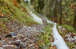 THEMENBILD - ein schmaler Waldweg, am Wegrand liegt noch Neuschnee, aufgenommen am 28. April 2019, Kaprun, Österreich // a narrow forest path, fresh snow still lies at the edge of the path on 2019/04/28, Kaprun, Austria. EXPA Pictures © 2019, PhotoCredit: EXPA/ Stefanie Oberhauser