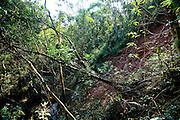 Nova Lima_MG, Brasil...Reserva Ecologica dos Fechos em Nova Lima, Minas Gerais...The bromeliad in Reserva Ecologica dos Fechos, Minas Gerais...Foto: JOAO MARCOS ROSA / NITRO