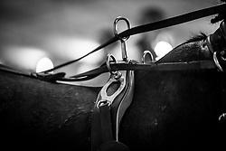 Dobrovitz Jozsef, HUN, Favory Fegyenc, Idian, Siglavy Capriola Szilaj, Siglavy Capriola XVII 4<br /> Vlaanderens Kerstjumping - Memorial Eric Wauters - Mechelen 2018<br /> © Hippo Foto - Dirk Caremans<br /> <br />  29/12/2018