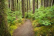 Sol Duc Falls Trail in Olympic National Park near Forks, Washington