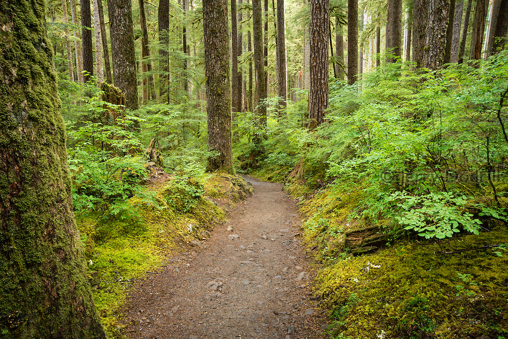 Sol Duc Falls Trail in Olympic National Park near Forks, Washington