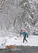 Alaska. Anchorage. Holiday Nordic Skiing along Campbell Creek.