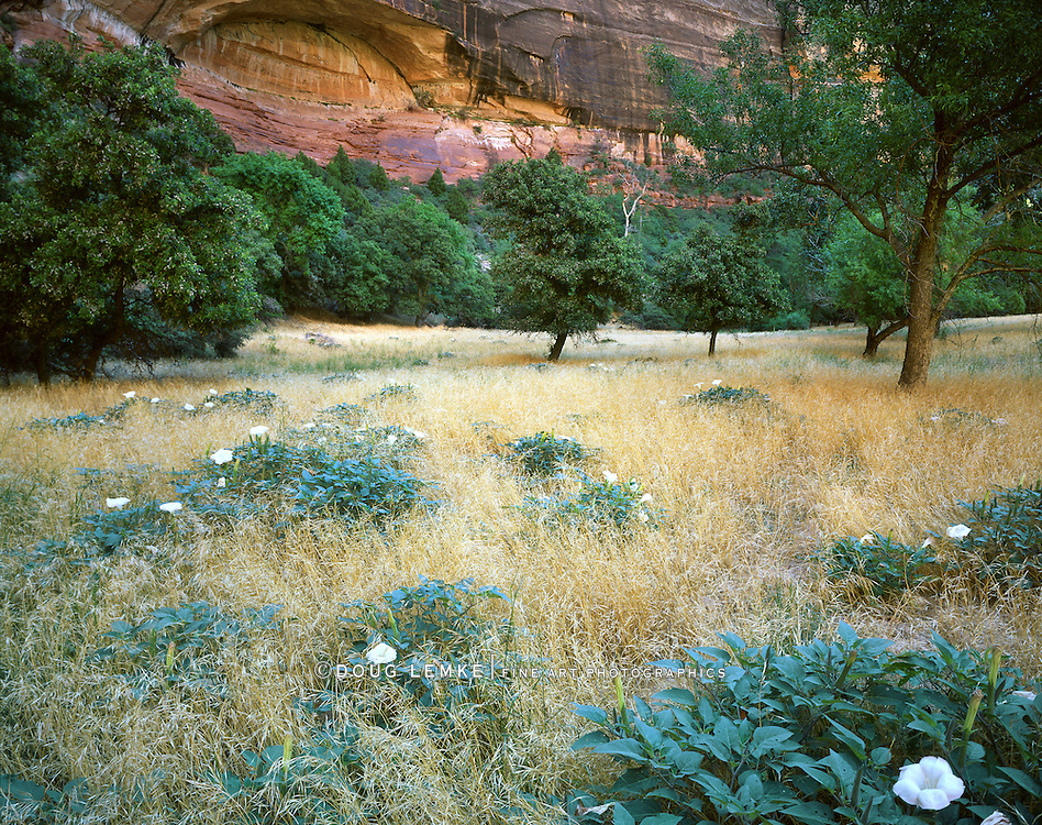 Field And Flowers, Zion National Park, Utah