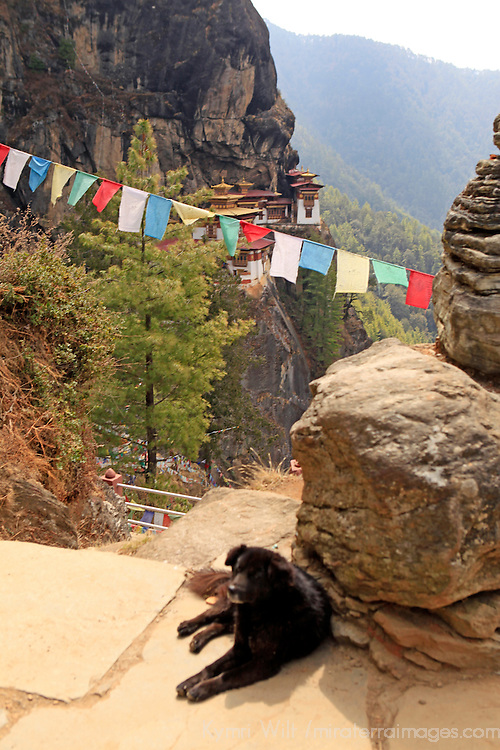 Asia, Bhutan, Paro. Dog with the best view in the world, overlooking Tiger's Nest Monastery in Bhutan.