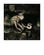 """""""Monkey Gone to Heaven 1988/2014. Sleeve artwork for the Pixies: """"Monkey Gone to Heaven"""" and """"Doolittle"""" (4AD Records/1988). The negative was made in 1988 on Agfapan 25 120 film and hand-printed by me, the photographer, in June 2014, on 12"""" x16""""  (40.64cm x 50.80cm) Foma Fomatone Classic fibre paper as a limited edition of 15. The prints are silver gelatin """"lith prints"""" that have been split-selenium toned and processed using archival methods. Each print is stamped, titled, numbered, dated, signed by myself and comes with a certificate of authenticity. Please email me at info@simon-larbalestier.co.uk for pricing, availability and shipping info. All prints are shipped from the United Kingdom."""