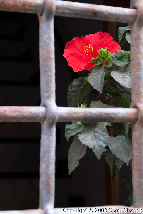 A siingle red flower sits in a window behind strong metal bars.