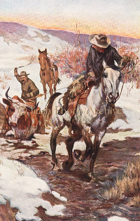 Winter work for cowboys: Pulling a beast out of a muddy creek. Illustration published c1900.