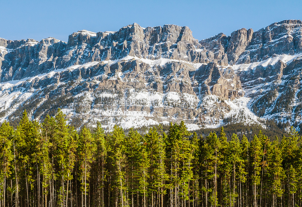A view of a row of trees in front of Castle Mountain in the Rocky Mountains near Banff, Alberta, Canada.<br />