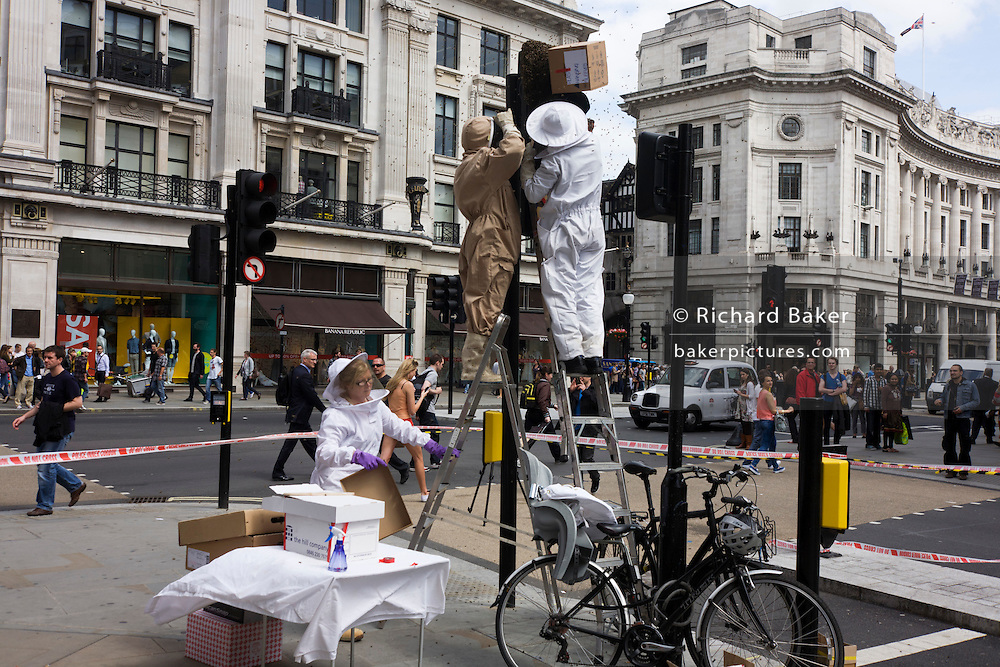 A swarm of bees appeared on a set of traffic lights in central London at the junction of Regent Street and Hannover Street.