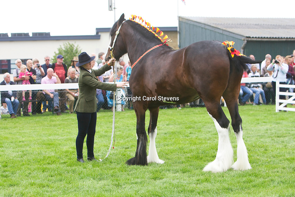 Ceri Pleavin with Mrs S J Pleavin's bay mare  Shortly Olympic Lade  Sired by Moorfieldo Manor Mac<br /> <br /> Winner 3year old Filly or Gelding Class<br /> <br /> Best Mare Filly<br /> <br /> Reserve Champion Shire