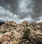Hidden Valley, Joshua Tree National Park, minutes after receiving a heavy downpour during one of California's heaviest winter storms during 2014.  Image is a composite of two vertically stacked photos.