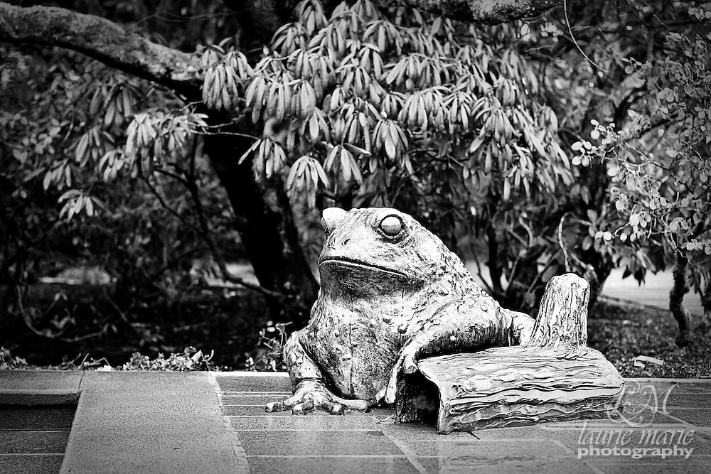 Bronze frog statue at Bellevue Botanical Gardens - bw