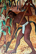 MEXICO, MEXICO CITY, MURAL Rivera's Huaxtec Culture and corn