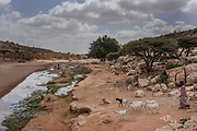 A man walks his livestock to a nearly dry riverbed on February 24, 2017 in Dhudo, Somalia. People travel up to 75 kilometers to this area to get water, as it is one of the only sources left in the region. Somalia is currently on the brink of famine with over half of the country's population facing acute food insecurity according to the United Nations. The intensifying crisis has humanitarian groups racing to stop a repeat of 2011, in which 260,000 people died of famine throughout country.