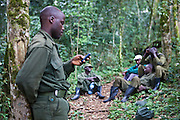 Ben, a Gorilla tracker/guide relaxes with the other guides after trekking the Bitukura group of Mountain Gorilla in Bwindi Impenetrable Forest, South Western Uganda.