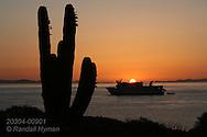 Cardon cactus frames sunrise over Lindblad's Sea Lion cruise ship at Isla San Esteban in Sea of Cortez; Baja, Mexico.