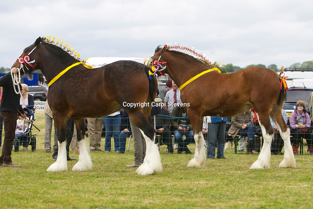 LEFT - Matthew Bedford and Phoenix Gemma<br /> Sire    Penrhos Brave Heart<br /> Show Champion<br /> RIGHT - Mr R Bedford's Bay Filly  Hartcliff Rihanna  f 2011<br /> s  Boothay Richard<br /> d  Skelton Phoebe<br /> Bred by owner<br /> Junior Champion and Reserve Show Champion