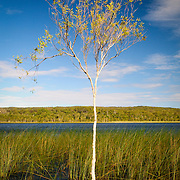Brown Lake is a freshwater lake on North Stradbroke Island, in Queensland, Australia. Known as a perched lake like other lakes on the sandy islands in the region of South-East Queensland it retains its water due to a layer of leaves lining the lake floor.[1] This is particularly apparent in the Brown Lake as tannin is exuded from the leaves, dropped from surrounding Paperbark Melaleuca and Ti-trees Leptospermum, stains the water to a rich brown colour not dissimilar to that of tea. North Stradbroke Island, just off Queensland's capital city of Brisbane, is the world's second largest sand island and, with its miles of sandy beaches, a popular summer holiday destination.