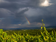 Storm over Xinomavro vineyards