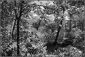 Montagne Ste Victoire (Route Cézanne).