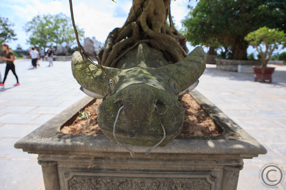 A stone water buffalo within the roots of a tree in the grounds of the Lady Buddha, Da Nang, Vietnam