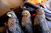 Quail Hunting Stock Photos