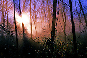 Sun rays break through the cold winter air in the woods of Mississippi.