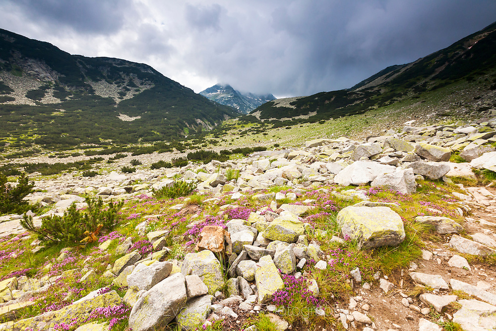 Demyanitsa Valley in Pirin Mountain