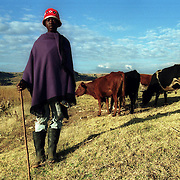 Teyateyaneng, Lesotho                        May 21, 2002.A herd boy in Lesotho looks after his family cattle in Teyateyaneng. .Photo by Lori Waselchuk/South Photographs.