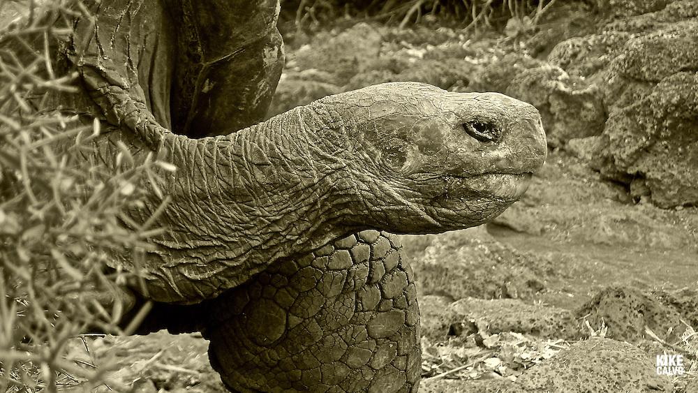 Galapagos Islands. Ecuador.