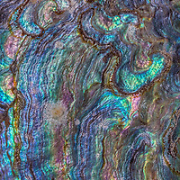 Intricate patterns and textures found inside iridescent abalone shell.