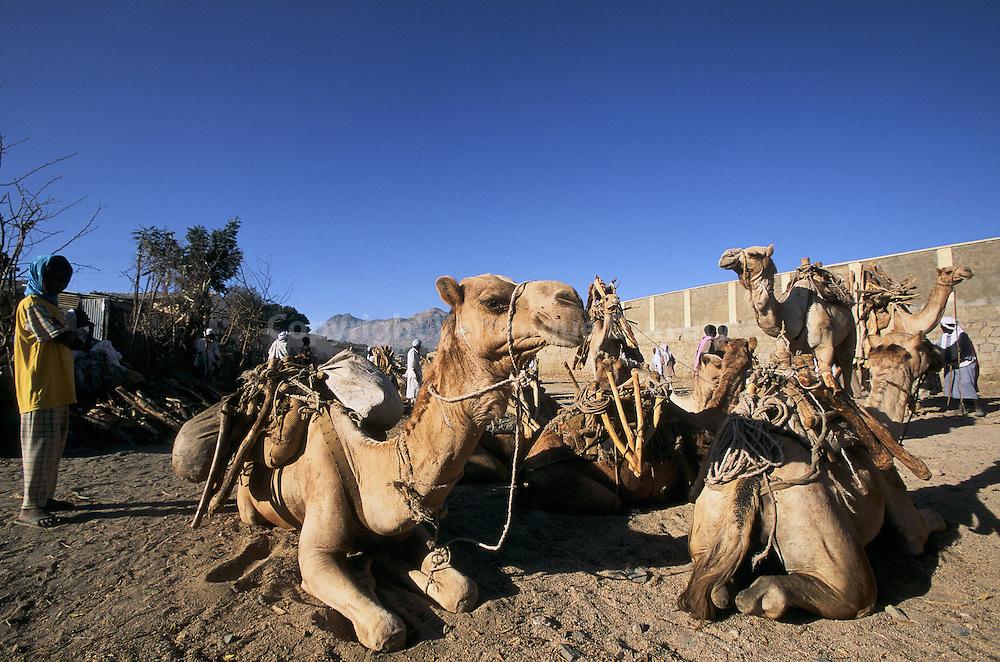 Le marché aux chameaux se tient tous les lundi matin dans la petite ville de Keren, sur les hauts plateaux erythréens...Le marché aux chameaux se tient tous les lundi matin dans la petite ville de Keren, sur les hauts plateaux erythréens.