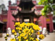 11 APRIL 2012 - HO CHI MINH CITY, VIETNAM:  Flowers at the Jade Emperor Pagoda in Ho Chi Minh City, Vietnam. It was built in 1909 by a Cantonese (Quang Dong) Congregation. It is one of the most colourful pagodas in HCMC, filled with statues of phantasmal divinities and grotesque heroes. Smoke of burning joss sticks fills the air, obscuring the exquisite woodcarvings decorated with gilded Chinese characters. The roof is covered with elaborate tile work, while the statues, which represent characters from both the Buddhist and Taoist traditions, are made of reinforced papier-mâché. The pagoda is dedicated to the Emperor of Jade, the supreme Taoist god. Ho Chi Minh City, formerly Saigon, is the largest city in Vietnam and the country's commercial center. It was the capital of South Vietnam before the reunification in 1975 and still shows more signs of American influence than northern Vietnam does.    PHOTO BY JACK KURTZ