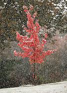 2009 October snow