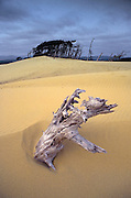 Image of Oregon Dunes National Recreation Area, Oregon, Pacific Northwest