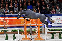 066, Mr Cornet VG<br /> KWPN hengstenkeuring - 's Hertogenbosch 2020<br /> © Hippo Foto - Dirk Caremans<br /> 29/01/2020