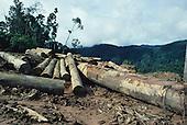 Deforestation Landscapes Logging Sarawak