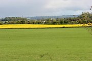 rapesead, crop, oilsead, farming, arable, tillage, louth, ireland,