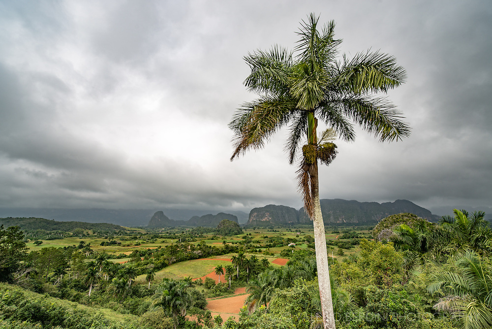 A coconut palm stands in front of the Viñales Valley (''Valle de Viñales). This is a UNESCO World Heritage area in the west of Cuba. The karstic environment and a particular micro climate makes it the perfect place to grow tobacco. Tobacco grown in this area is considered the best quality in the world.